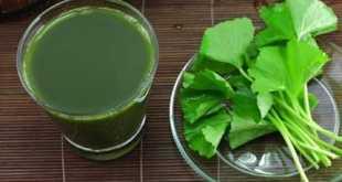 Là loại rau có tính sát trùng, giải độc, thanh nhiệt cơ thể cùng kết hợp với hàm lượng collagen khá cao.