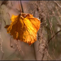Love's Autumn/Poetry
