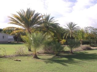 South Coast Horizons Antigua Holidays