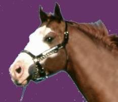 Horse Premarin estrogen WHI Jeffrey Dach