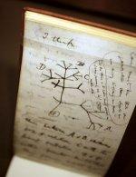 tree_of_life_darwin