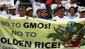 GMO_Golden_Rice_Phillipines_Say_No