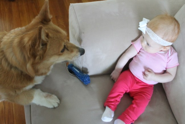 A Baby and Her Corgi