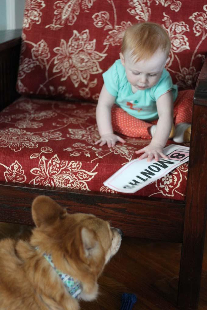 A Baby and Her Corgi