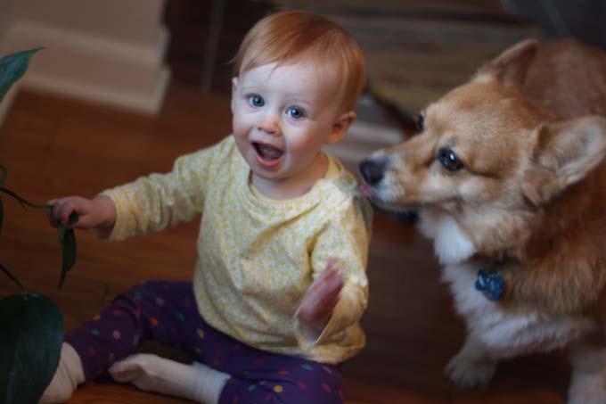 Corgi and Baby