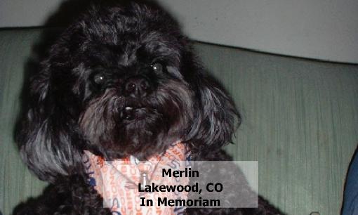 8Merlin