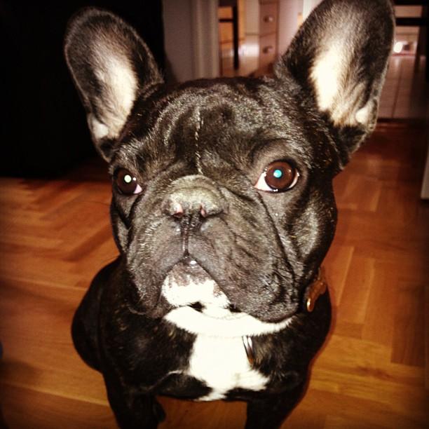 Vasárnapi #bulldog