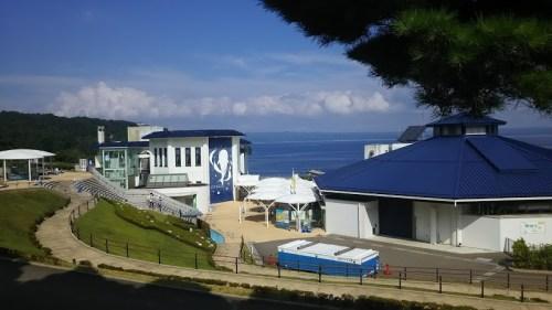 DSC 0654 500x281 のとじま水族館のイルカショーが楽しい♪宿泊は金波荘がおすすめ☆