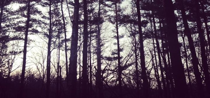 TN000340-720x340-woods-F
