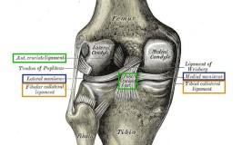 Lesiones de menisco y ligamentos de rodilla. Biomecánica y anatomía.