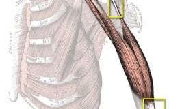 Músculo, Tendón, Ligamento. Definiciones y Características.