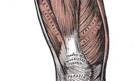 Vasto interno y el mito de los 15 últimos grados de extensión de rodilla