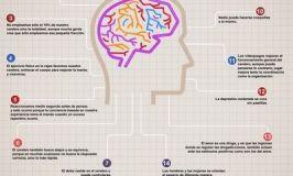 Curiosidades sobre el cerebro (infografía)