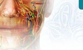 Visible Body: Human Anatomy Atlas, una buena App de anatomía