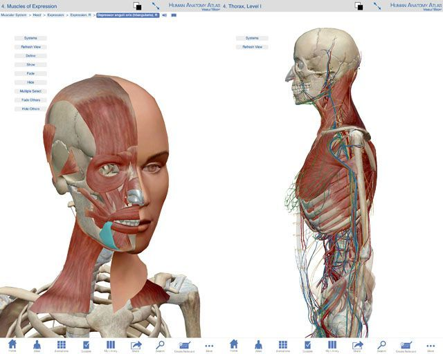 Atlas_anatomia
