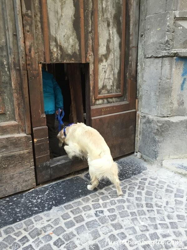 Passeggiata tra antichi portoni e palazzi di Napoli tra scale monumentali, teste di cavallo, Escher e Zilda