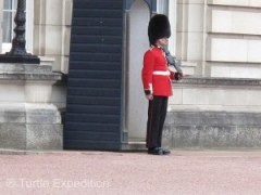 The solitary guard protecting the Queen at Buckingham Palace does get to move occasionally.