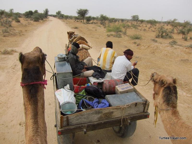 Heading in the Thar Desert