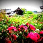 Ofusa Kannon temple, near Sakurai