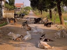 Ninh Binh Roadblock
