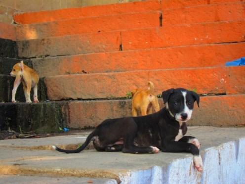 Varanasi Pups
