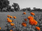 Temple Flowers, Khajuraho