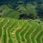 Dragon's Backbone Rice Terraces.  Longsheng, China