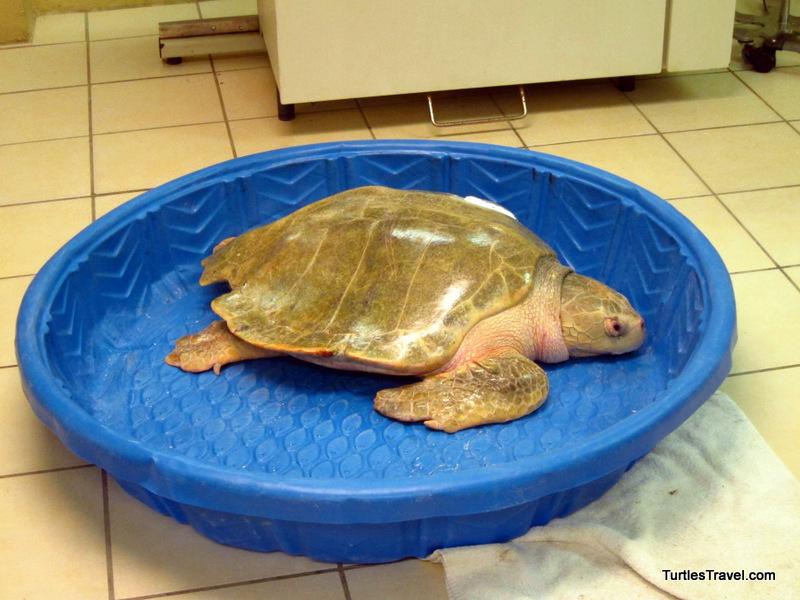 Turtle Hospital, Turtle Hospital