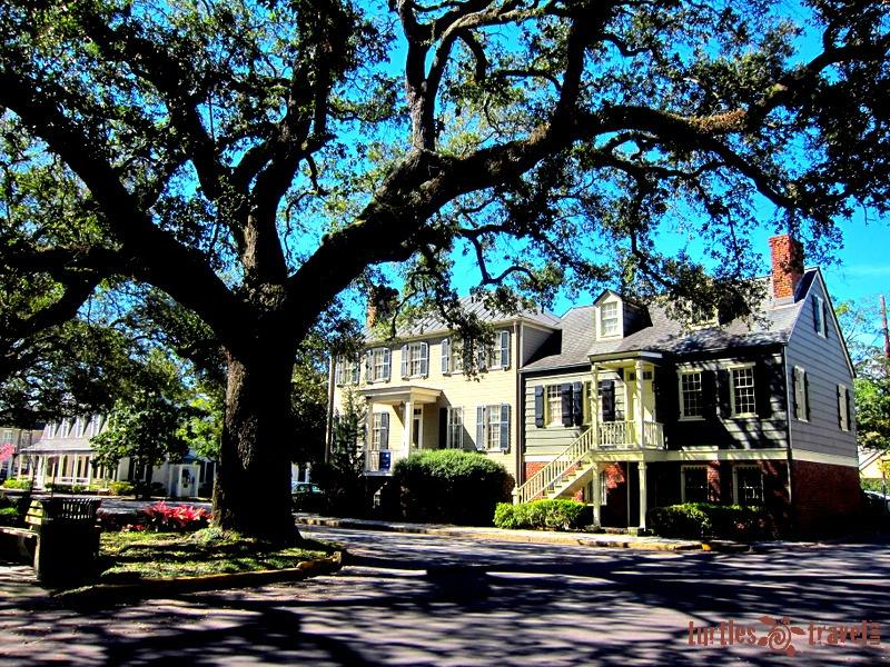 February: Savannah