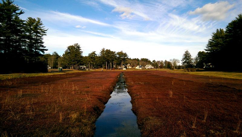 Cranberry Bog: Carver, MA