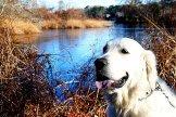 Rebel at Long Pond