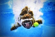 12 Underwater Photos of Dogs Fetching Their Ball