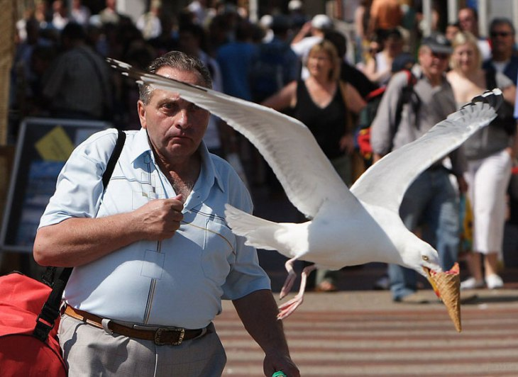 seagull takes ice cream perfect timing