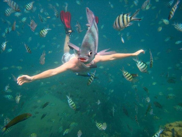 underwater-fish-photobomb-animal-photobombs