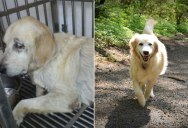 These 18 Before and After Photos of Adopted Dogs Will Warm Your Heart