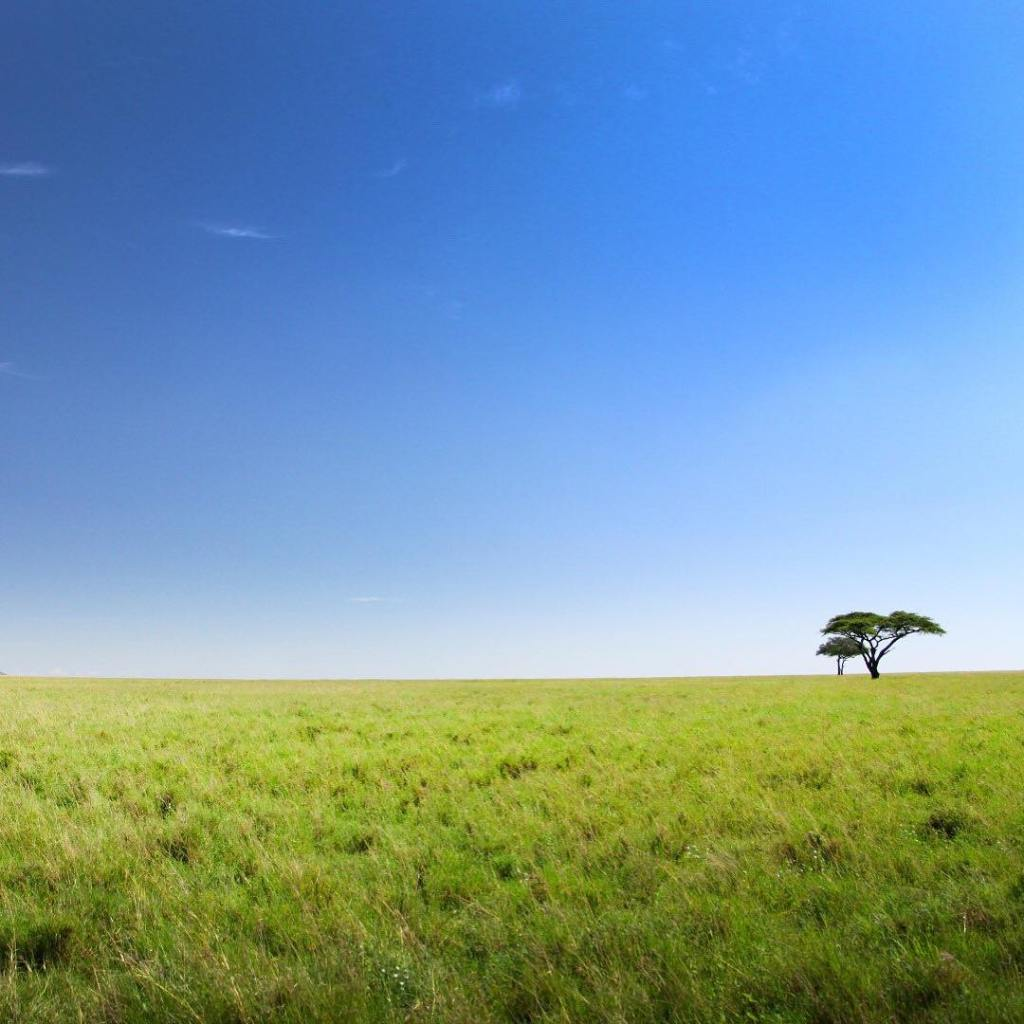 The epic endless plains of the Serengeti
