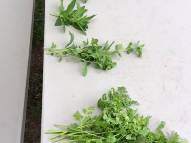 Freeze fresh herbs from your garden