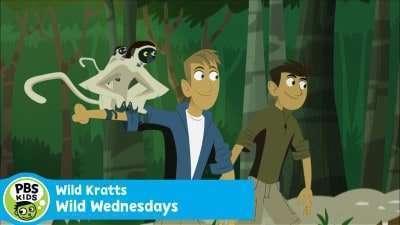 Wild Kratts New Episodes in July 2015