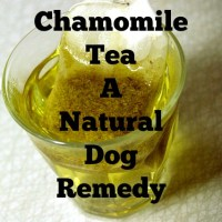 Chamomile Tea A Natural Dog Remedy
