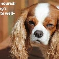 Healthy Dogs From The Inside Out #WholeBodyHealth