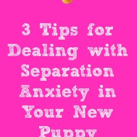 Separation Anxiety In Your New Puppy
