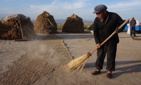 Old fellow winnowing grain in Jianshan Village, Gansu