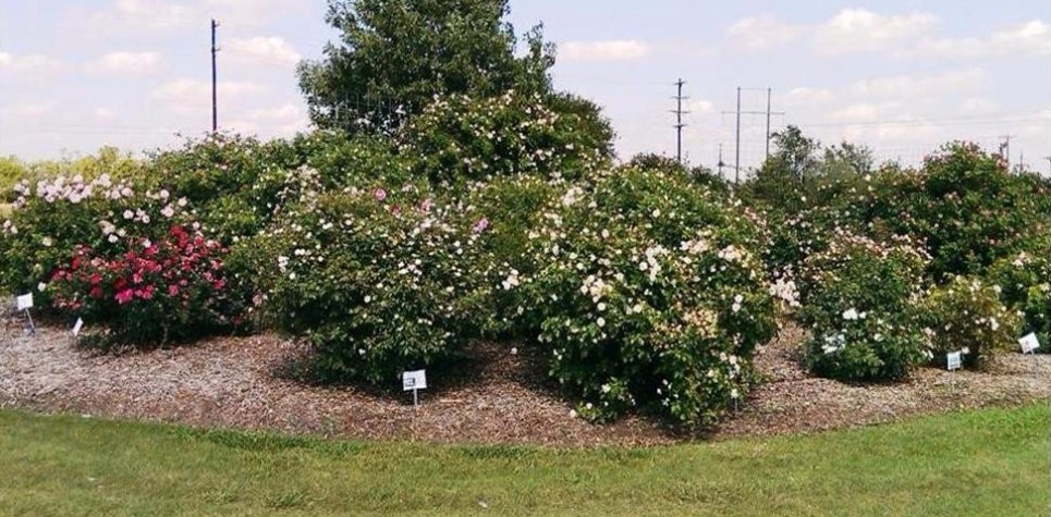 Demonstration Rose Garden