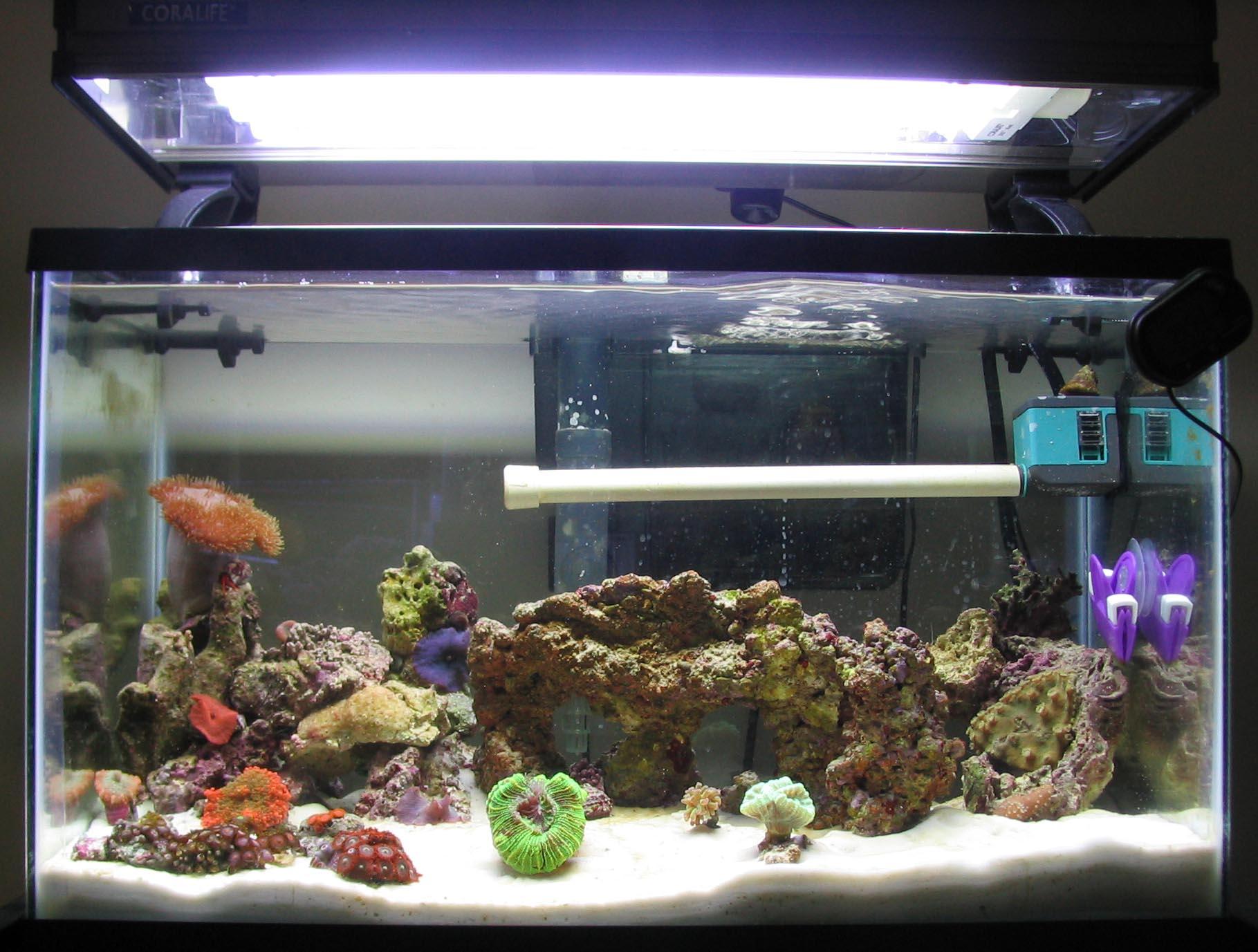 10g reef saltwater aquarium tyler merrick for Saltwater fish for 10 gallon tank