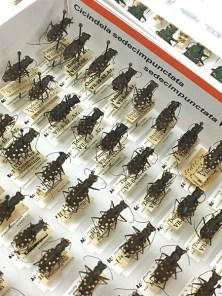 Newly curated and digitized specimens