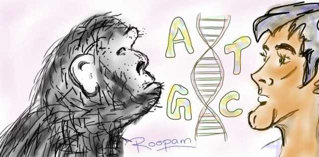 The chimpanzee genome is more than 95 % identical to the human genome - by Roopam