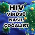 HIV VİRÜSÜ NASIL ÇOĞALIR?
