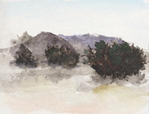 Cedar_Trees