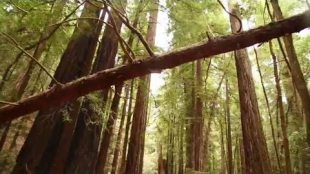 """Kayer – """"Redwood Hideout"""" ft. DJ Fossil"""