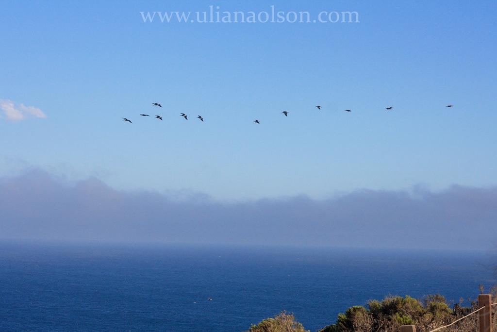 Malibu-Paradise Cove (21)